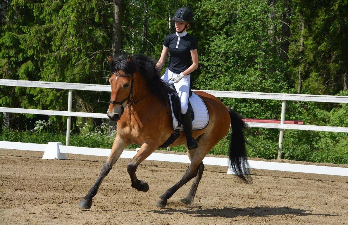 Horses - way of life